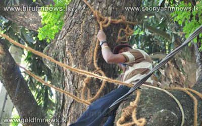 Protest+atop+tree+in+Kottawa+over+-+No+change+in+Dharmapala+primary