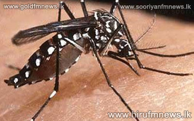 Highest+dengue+threat+in+Colombo%3B+70+percent+students%3B+Dengue+hit+law+faculty+student+dies