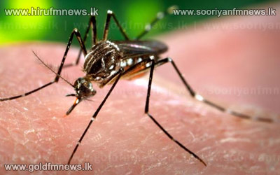 New+species+of+mosquito+discovered.