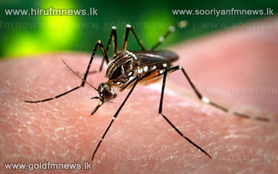 WHO+to+investigate+on+anti+dengue+mosquito.