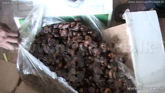24%2C000+Kg%27s+of+ill-suited+dates+for+consumption+seized