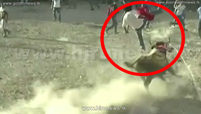 Bull+tosses+man+into+the+air+during+Peru+festivities-+%5Bvideo%5D