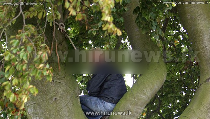 Man+launches+protest+on+tree
