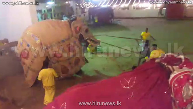 Woman+dies+after+elephants+run+rampage+at+Saman+Devalaya+Perahera