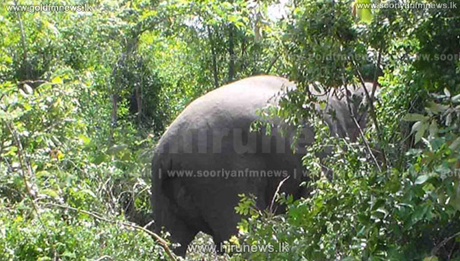 +Elephant+operation+halted+due+to+threats+by+people