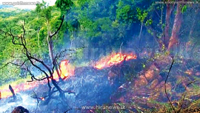 Severe+damages+in+the+wildfire+at+Habarana+Hurulu+Eco+Park