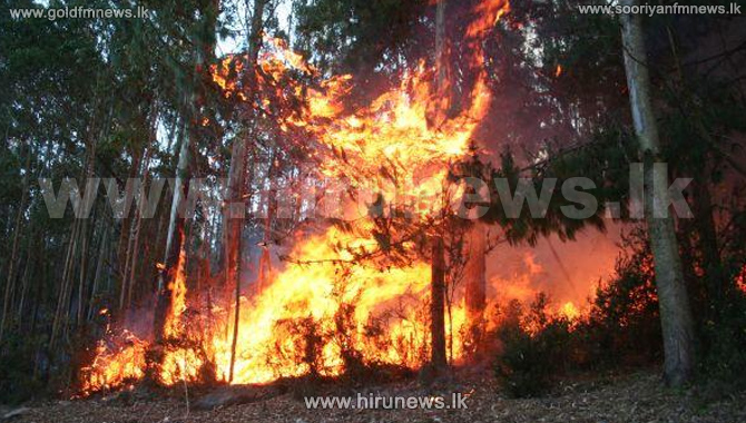 Five+acres+of+forest+destroyed+in+Yatiyanthota+fire+