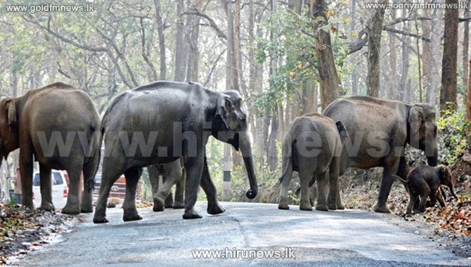 Dry+weather+causing+a+change+in+the+wild+elephant+movement+