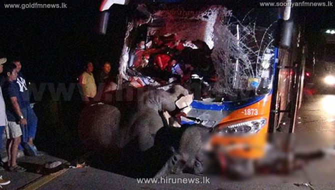 Baby+elephant+hit+and+killed+in+tragic+bus+accident+