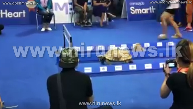 Pet+show+in+Thailand+features+racing+tortoise+and+hare