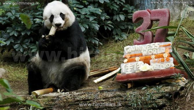 World%27s+oldest+Panda+in+captivity+dies+in+Hong+Kong