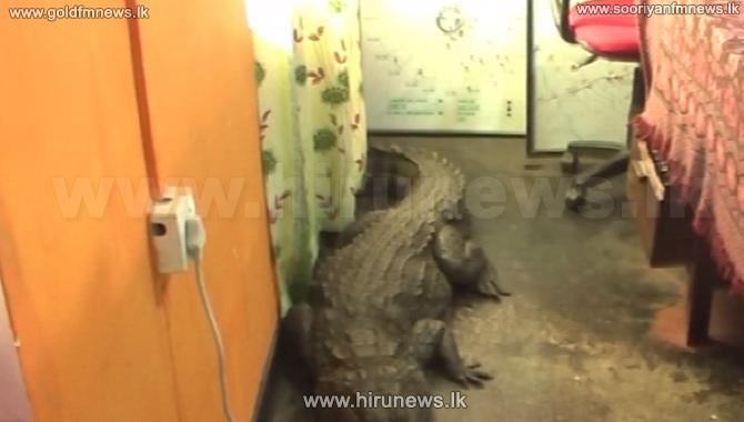 Croc+visits+Nochchiyagama+Police+station