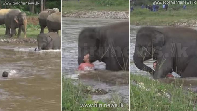 Elephant+rushes+into+river+to+%27save%27+drowning+man+