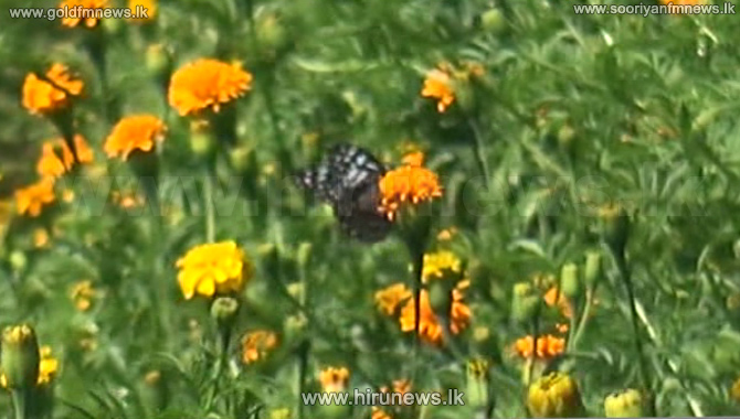 Special+offering+to+Lord+Buddha-+%5Bvideo%5D