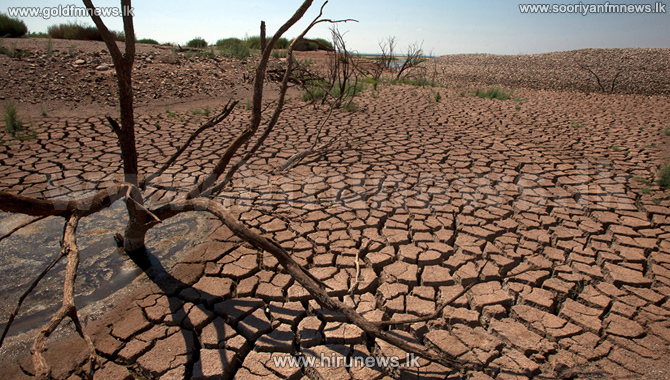 Drought+affects+120%2C000+acres+of+paddy