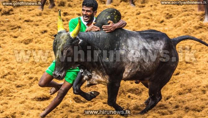 Jallikattu%3A+Thousands+protest+at+India+bullfighting+ban