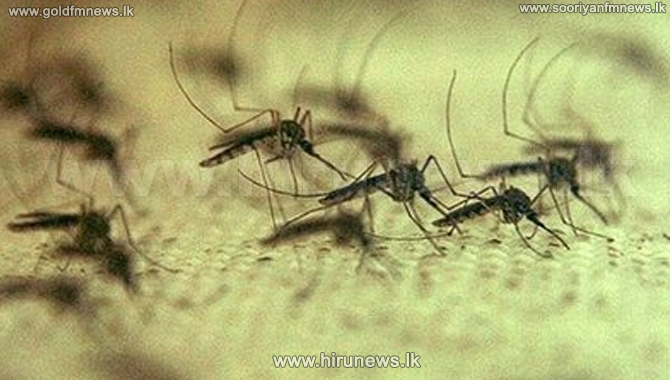 High+risk+of+dengue+spreading+in+drought+affected+areas