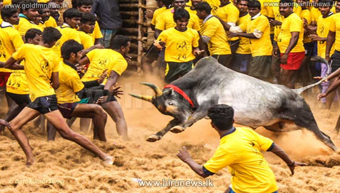 Jallikattu%3A+Two+die+in+India+bullfight+as+protests+continue
