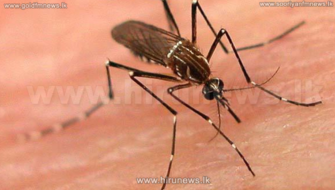 Malaria+Mosquito+discovered+in+Pesalai+contained