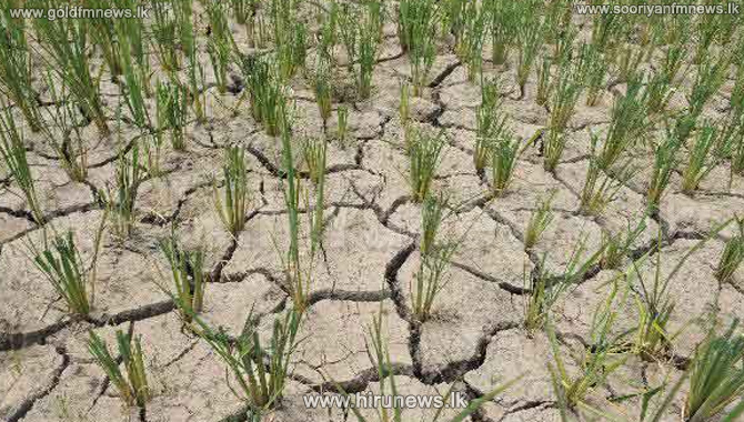 10%2C000+rupees+compensation+for+drought+affected+farmer+families