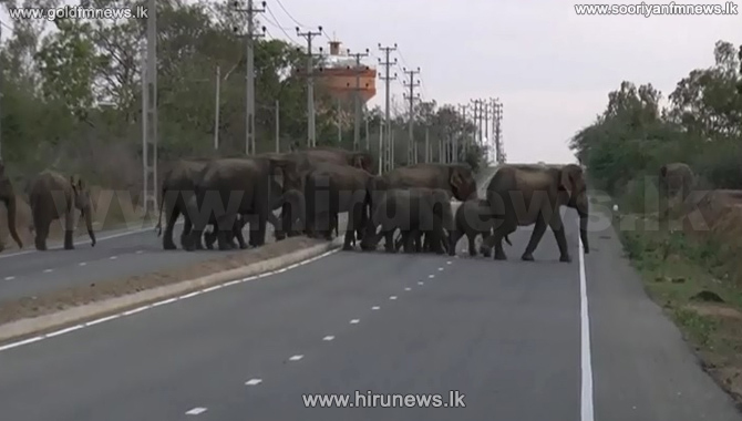 Tenders+called+to+remove+wild+elephants+from+Magampura+Port