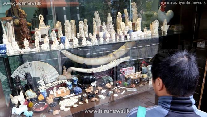 Hong+Kong+bans+ivory+trade