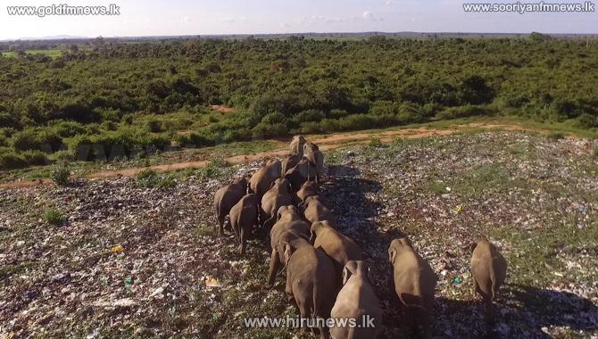 Deegawapi+garbage+dump+%E2%80%98death+knell%E2%80%99+for+wild+elephants+%28Photos%29
