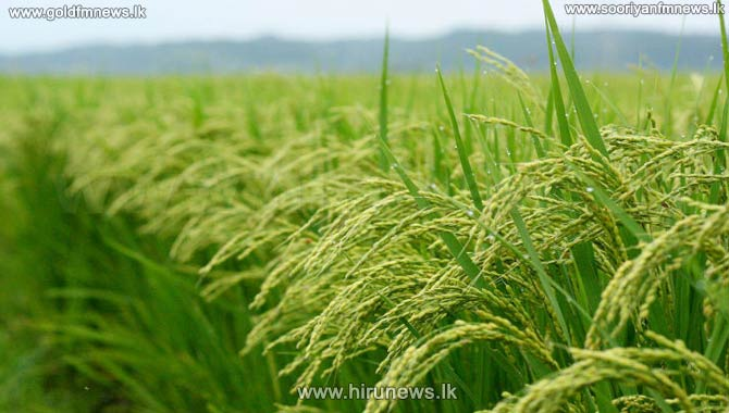 +Paddy+prices+increased+by+5+rupees