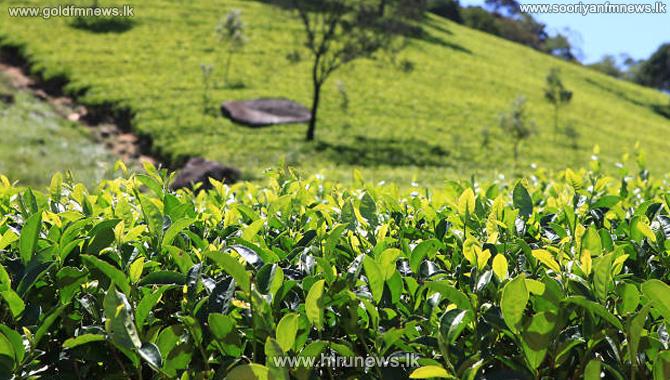 Sri+Lanka+Sept+trade+gap+widens+to+US%24758mn%2C+apparel%2C+tea+exports+fall