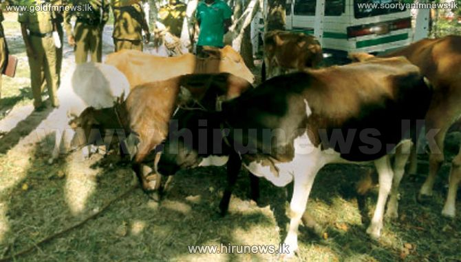 Risk+of+spreading+foot+and+mouth+disease+amongst+cattle+in+the+Southern+province+