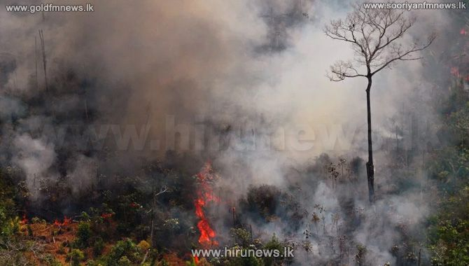 Fire+at+Gampola+-+Atabage+reserve