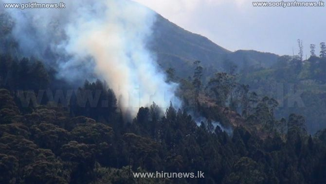 THE+MOUNTAIN+FOREST+RESERVE+OF+SINGIMALE+IN+HATTON+ON+FIRE+AGAIN