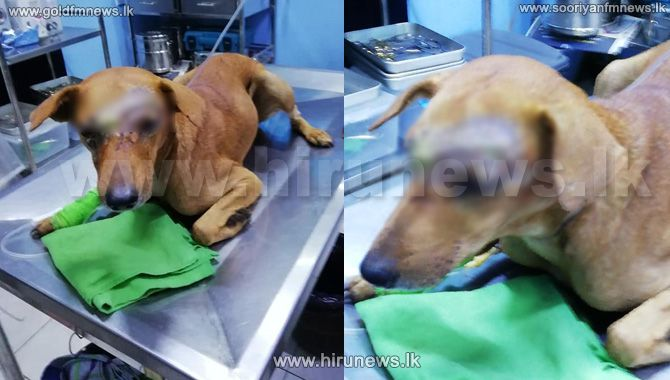 The+man+who+brutally+attacked+a+dog+in+Kuliyapitiya+with+a+manna+knife%2C+has+been+identified