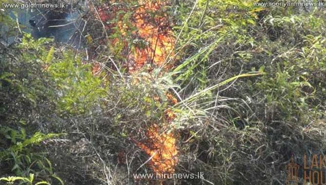 FOREST+FIRES+IN+TWO+FOREST+RESERVES+AT+HALDUMMULLA+AND+MASKELIYA