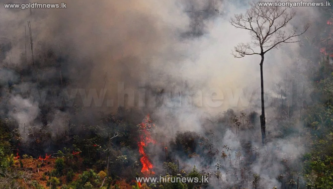 Forest+fires+increase+Public+requested+to+provide+information