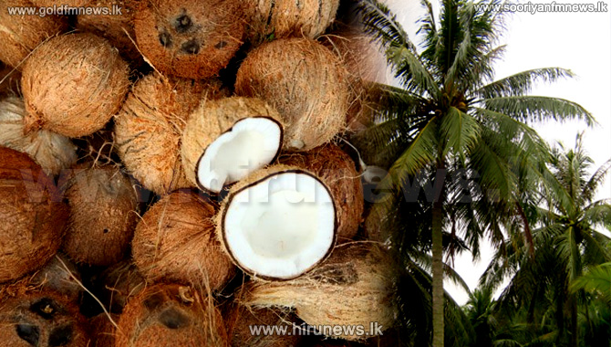 Coconut prices increase at auction