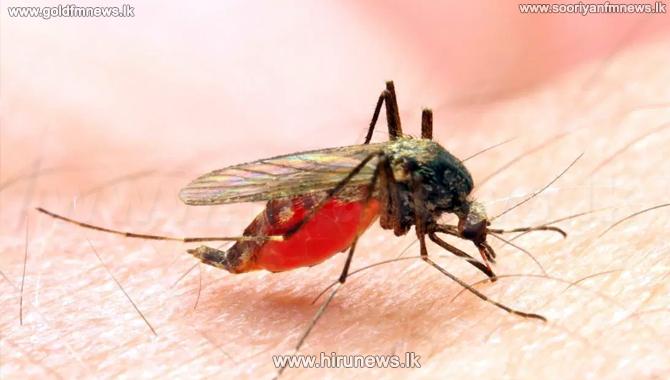 Three+malaria+patients+found+last+week