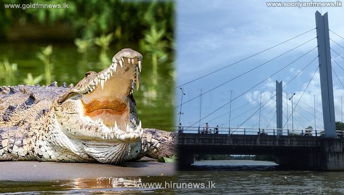A+crocodile+grabs+a+police+officer+who+fell+into+the+Nilwala+River+-+search+operation+underway+