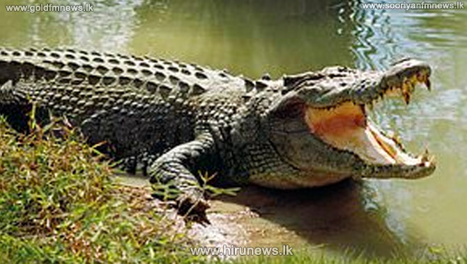 Girl, aged 3 ½ years, killed by crocodile (video)