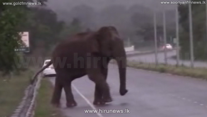 The Wild elephant that arrived at Mattala (video)