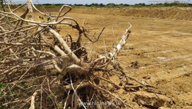 Clearing of Anawilundawa Ramsar wetland reported again