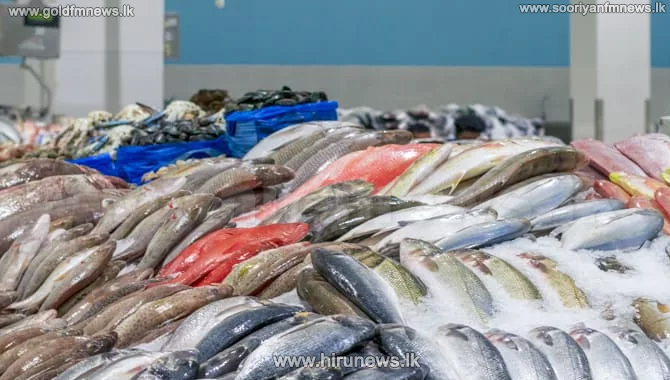 Import+duty+on+imported+fish%2C+dried+fish%2C+Maldive+fish+and+sprats+increased