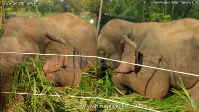 Wild elephant electrocuted