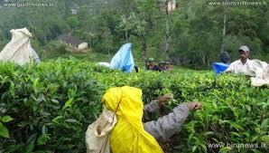 இலங்கையின் தேயிலையை சீனாவில் சந்தைப்படுத்துவதற்கான நடவடிக்கை
