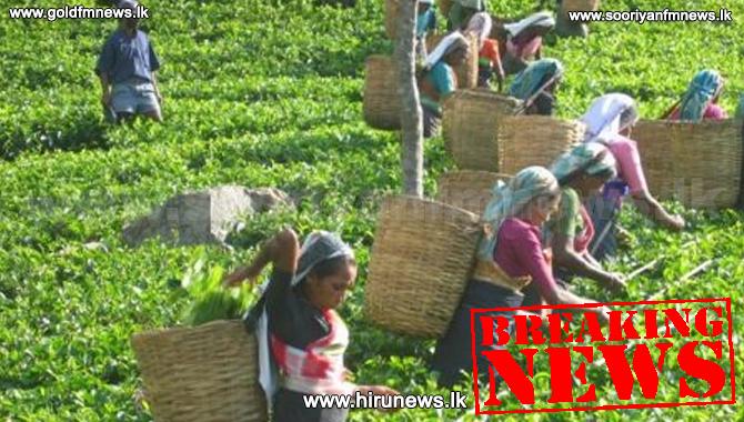 பெருந்தோட்ட தொழிலாளர்களுக்கு 1000 ரூபா வேதனம் - அமைச்சரவை அங்கீகாரம்!