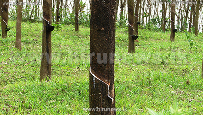 Committee for the promotion of rubber cultivation