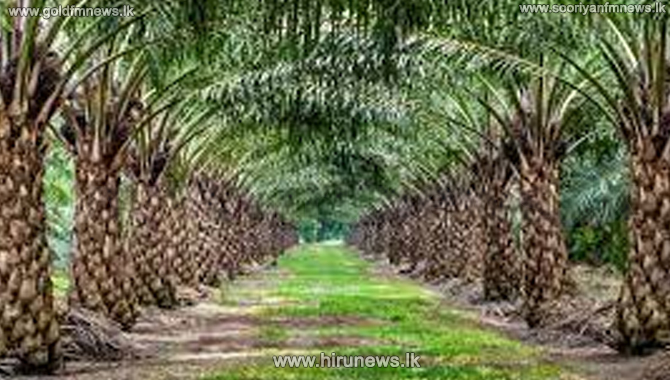 Alternative+crops+for+Palm+oil+plantations