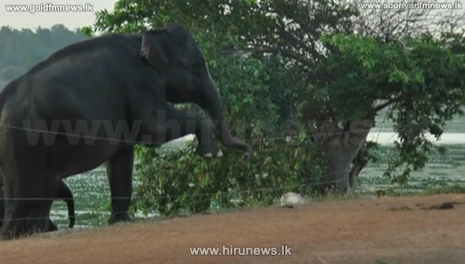 Human-elephant conflict: Wild elephants wander in several areas (Video)