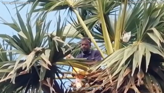 Palmyra toddy makers facing difficulties (Video)