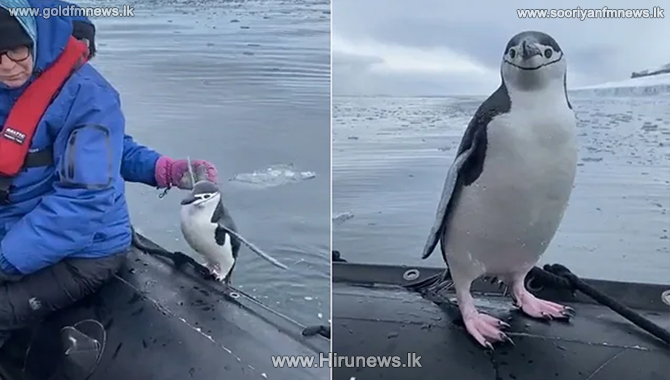 Watch a lonely Penguin hop into a tourist boat  (Video)
